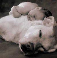 dogbabysleeping.jpg