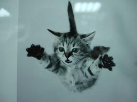 ucan-kedi-3.jpg
