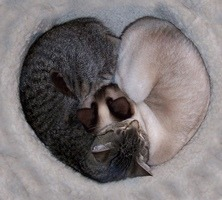 cat_heart.jpg