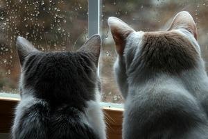 cat_depression_01.jpg