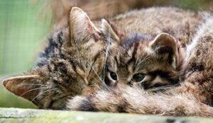 wild_cat_kitty.jpg