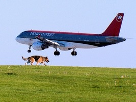 plane_dog.jpg