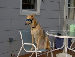 sitting_dog.jpg