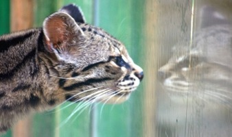 kedi_hareketleri_1.jpg