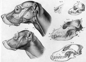 anatomi_1.jpg