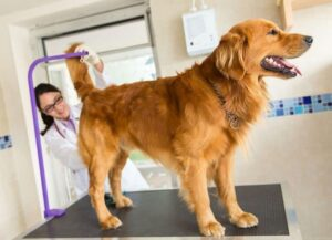 Köpeklerde Anal Kese Sağlığı